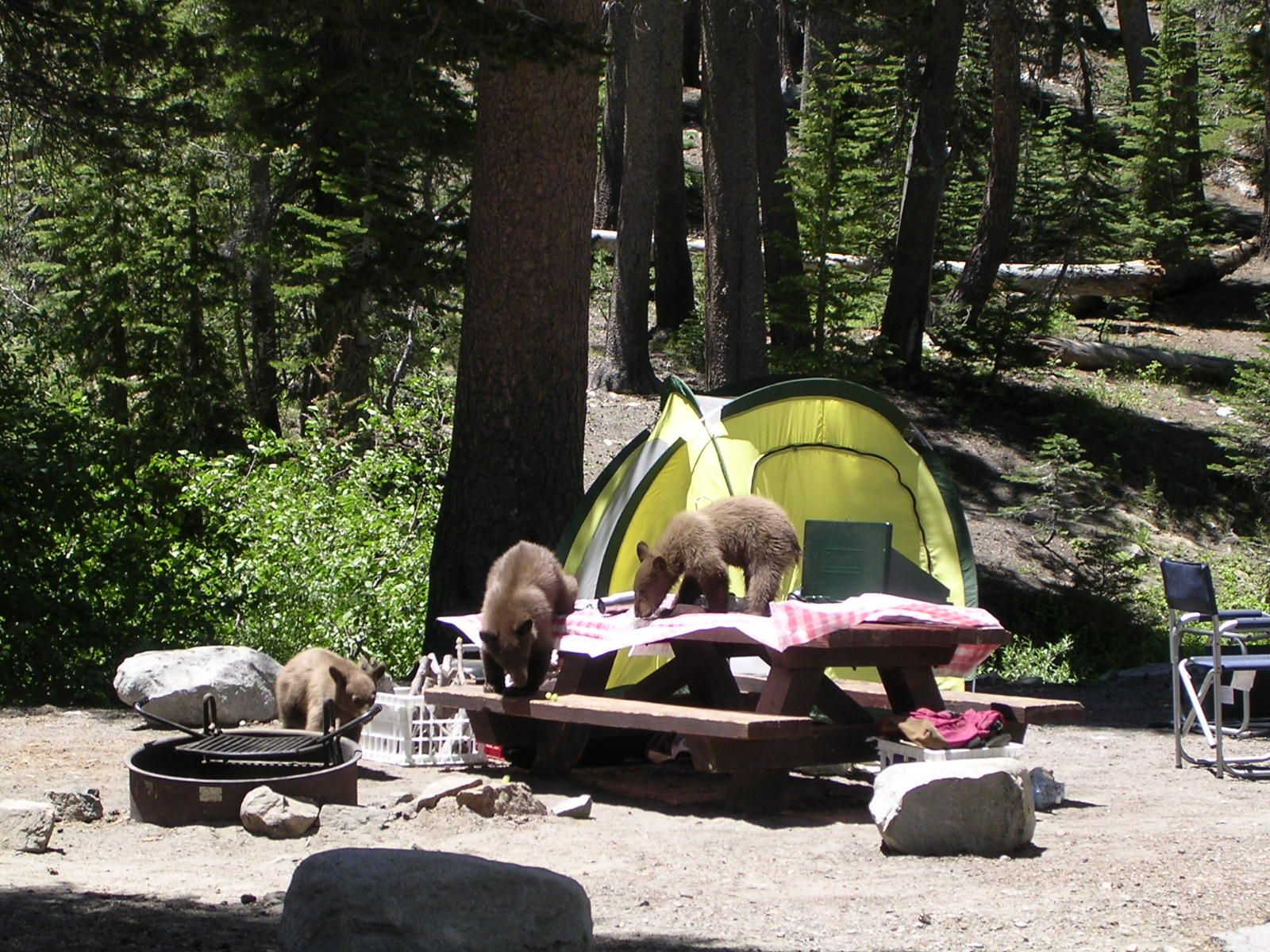 Trading Up: Transitioning from Tent Camping to the RV Life