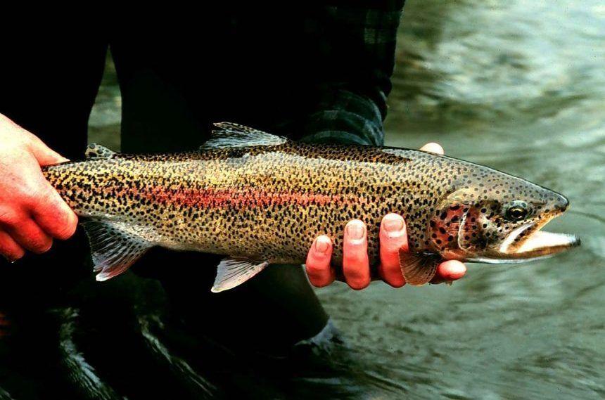 Les différents types de poisson que vous trouverez au Canada
